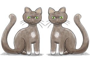 Geld verdienen im Internet mit Copycats