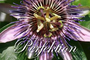 Warum Perfektionismus nicht vonnöten ist